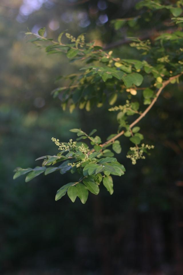 summer leaves in fog