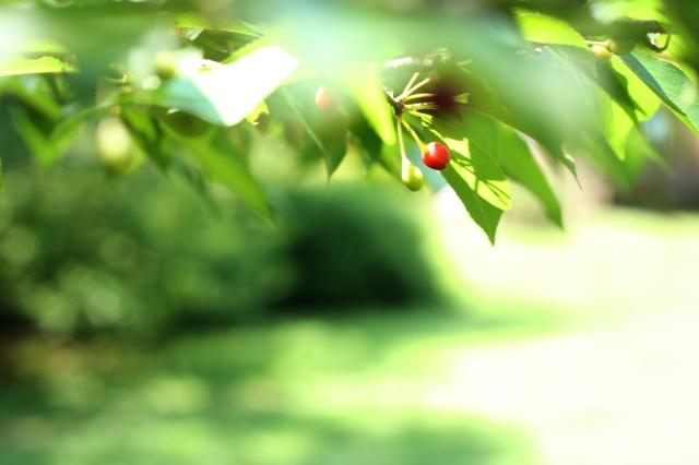 macro berries