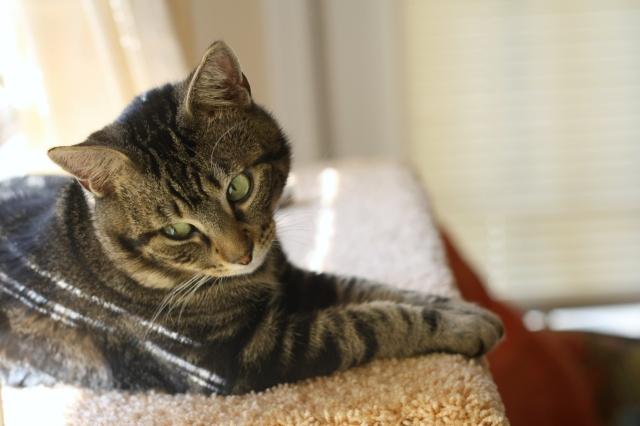 cat portrait stylewiseguide.com