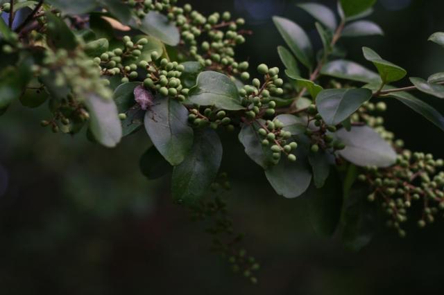 stinkbug on plant