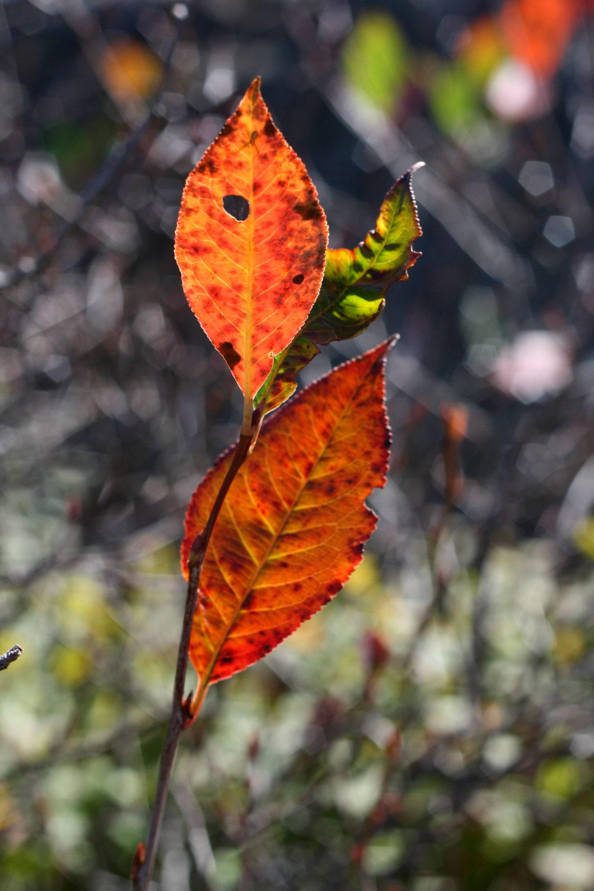 red leaves in the mountains, leah wise