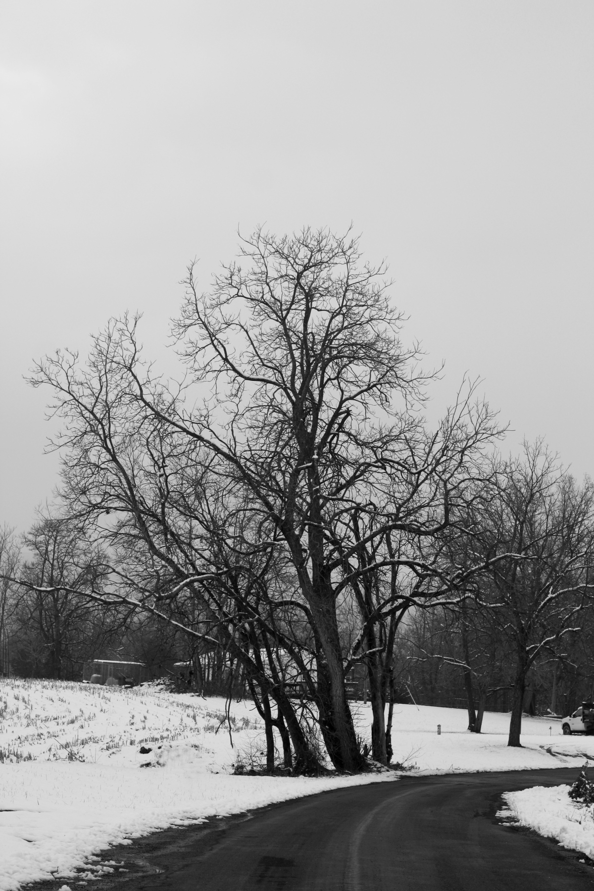 winter tree in snow